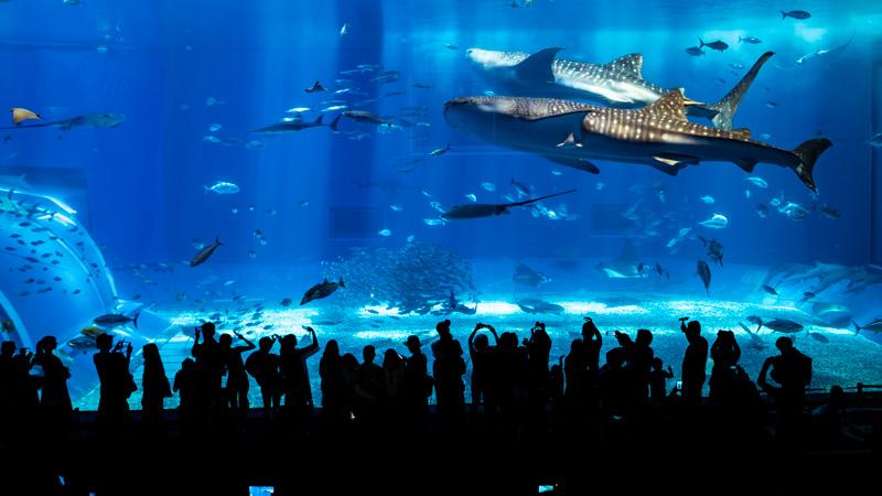 美ら海水族館の大水槽(沖縄)